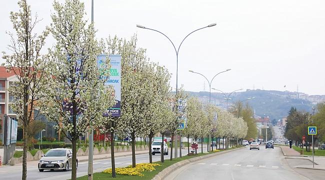 Çiçek açan ağaçlar görsel şölen sunuyor...