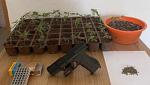 Saksıda Uyuşturucu Operasyonu...